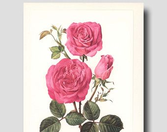 Pink Rose Wall Art Wall Decor Vintage by ParagonVintagePrints