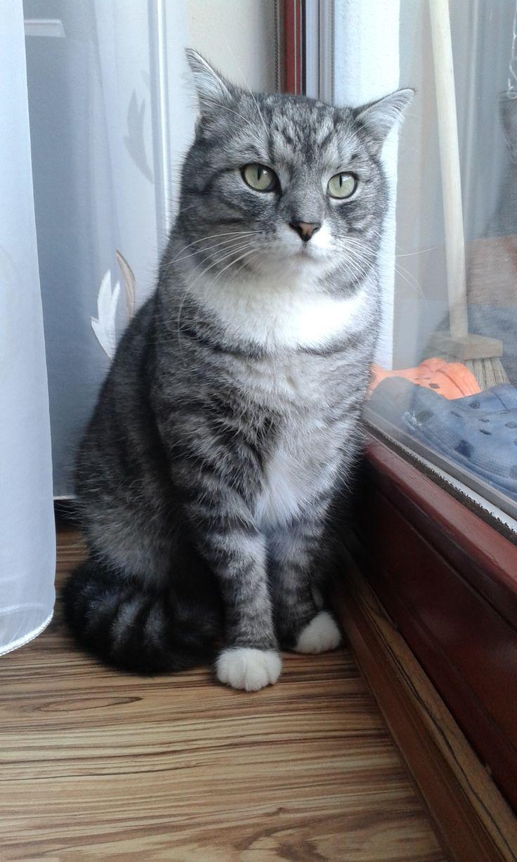Miloušek Oliver