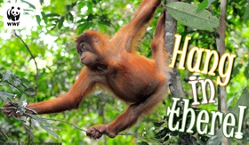 Send Free Ecards to Your Friends and Family    Send a free online greeting card to your friends and family to show that you care about wildlife and the planet. Simply choose an occasion listed below and write your own personal message. Free ecards from WWF are easy and fun!