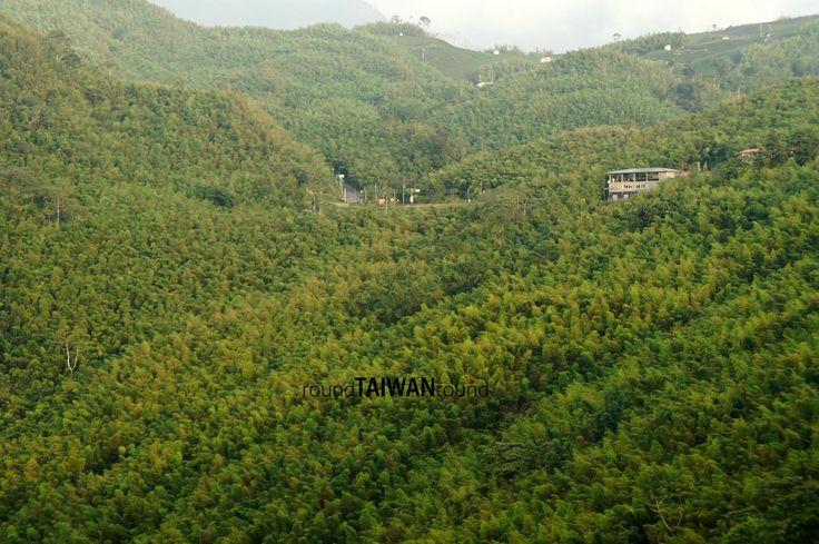 Daan Sea of Bamboo 大鞍竹海