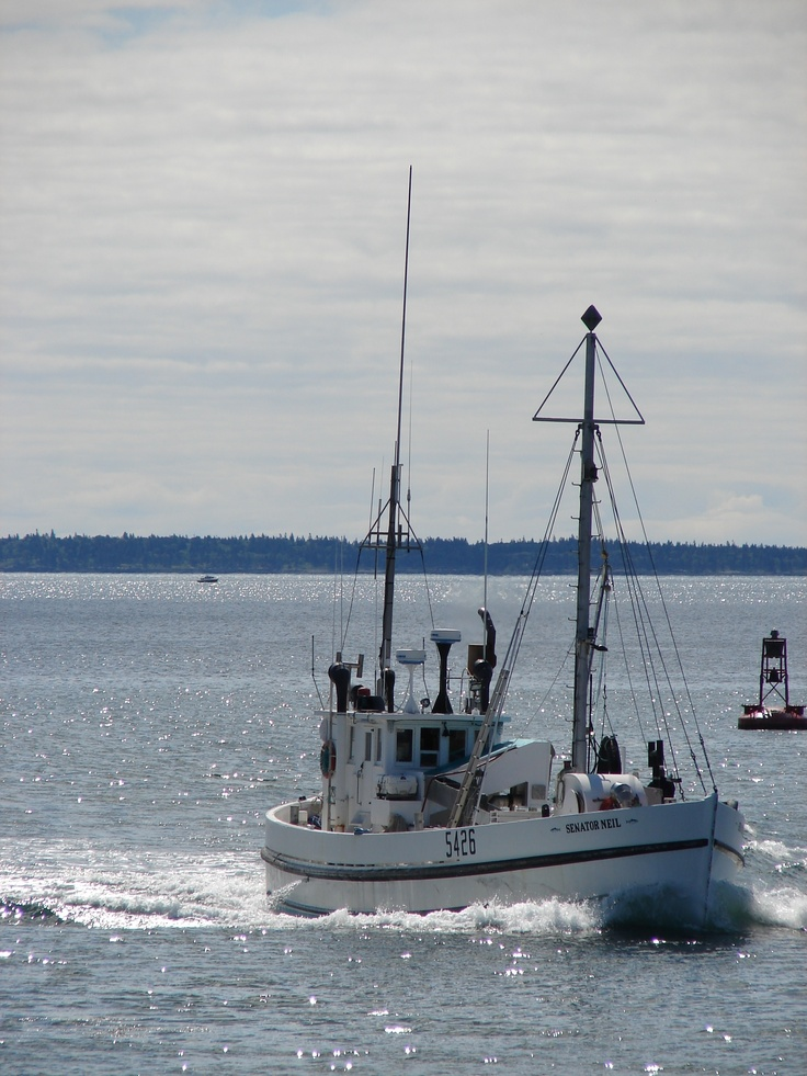 Sardine Carrier sailing into Blacks Harbour, N. B. | Bay ...