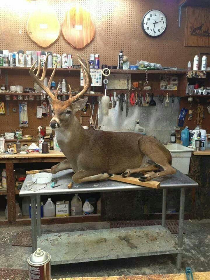 projects ideas dear head. Full body deer mount 301 best Taxidermy Ideas images on Pinterest  Deer