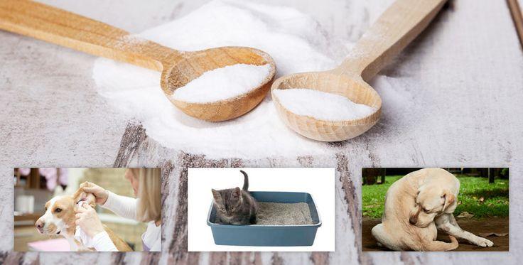 astuces naturelles vivre avec un chat anti puce chien. Black Bedroom Furniture Sets. Home Design Ideas