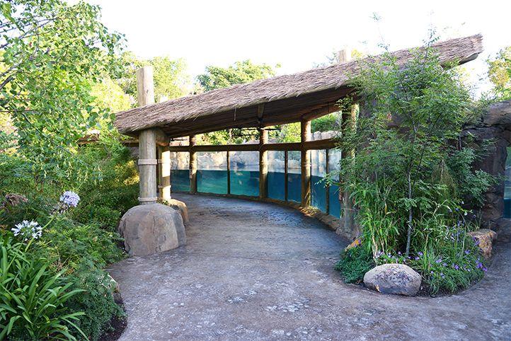 Hippo Cove Cincinnati Zoo Botanical Garden Cincinnati Ohio