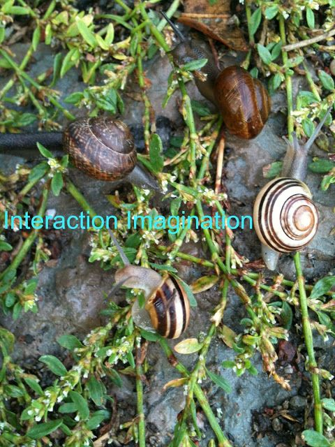 Interaction Imagination: Snail Party!