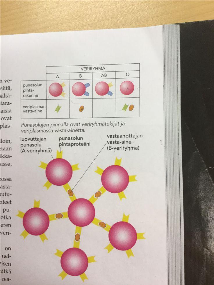Ihmisen biologia 9.lk
