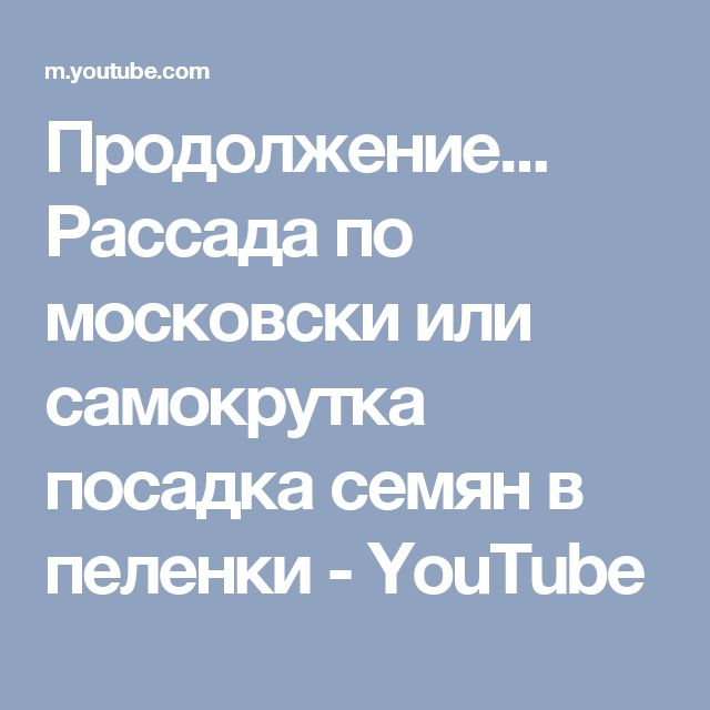 Продолжение... Рассада по московски или самокрутка  посадка семян в пеленки - YouTube