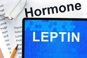 What Is Leptin? Start Here Leptin For Beginners! http://mp2.us/Leptin-beginners  What Is Leptin? Do I Have Low Leptin Levels? Most people have never heard of Leptin, so we will focus on the first question people ask, what is Leptin?  Leptin often referred to as the Obesity Hormone, is, in fact, the hormone that can help you to lose weight. Not only can you lose weight but you can have overall better health when you understand how to maximize ... read more http://mp2.us/Leptin-beginners