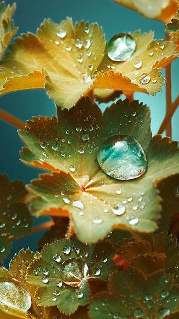 Gotas de lluvia sobre las hojas ...                                                                                                                                                                                 Más