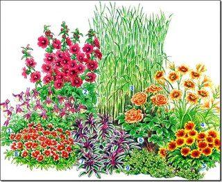 аквилегия,  лаватера ,мискантус китайский ,лилейник, гайлардия,Чайно-гибридная роза, шалфей лекарственный,солнцецвет,тимьян