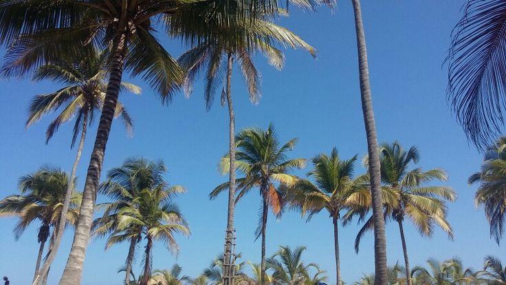 Caribe.