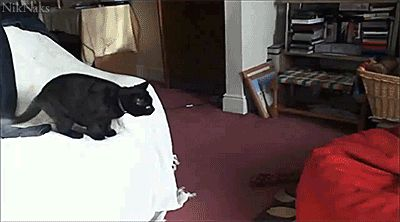 This cat who learned that the big red dot was not in fact a laser light. | The 40 Most Awkward Cats Of 2013