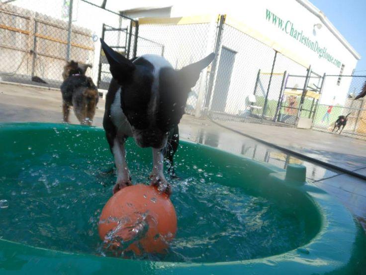 Best Dog Boarding In Charleston Sc