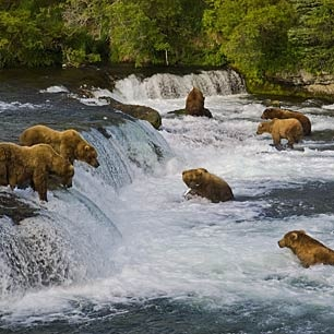 Alaska. I want to go in summer & see the natural beauty. Where to go?