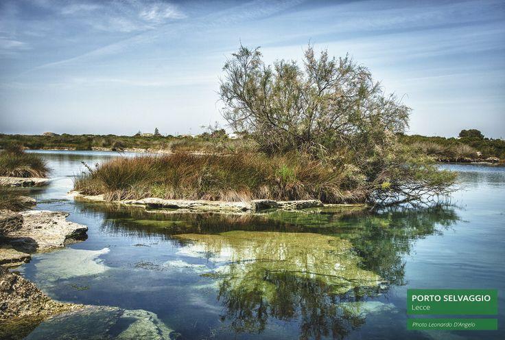 Il Parco naturale di #Portoselvaggio è uno degli spettacoli naturali più belli del Mediterraneo. Un ricco bosco di pini e di vegetazione della macchia mediterranea, situato su di uno dei litorali più naturali d'Italia, che ha più volte ottenuto il riconoscimento delle 5 vele per le sue acque cristalline. #Salento #Puglia #pugliaperlescuole