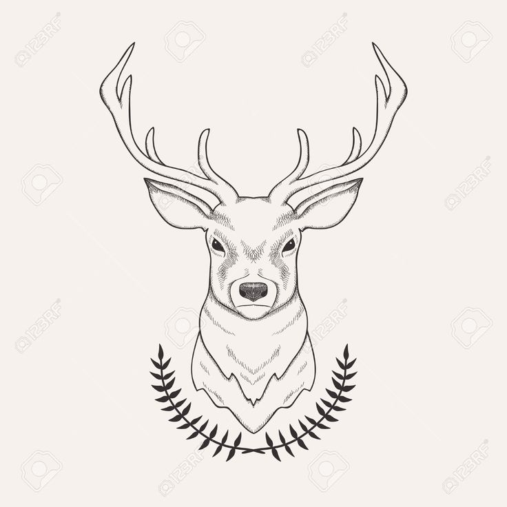 Vector hand drawn illustration of deer and laurel royalty free tattoo ideas pinterest