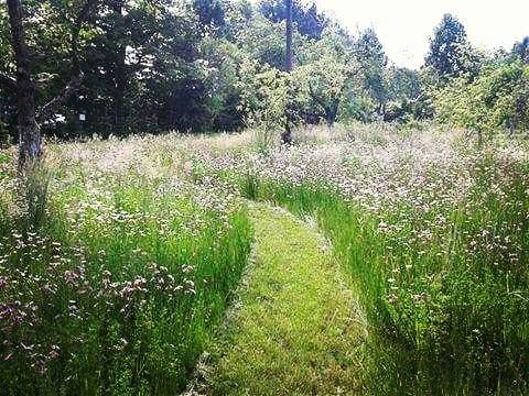 #greentar  we make dreams come true - our client wanted to have a meadow flower in her garden  Spełniamy marzenia. Nasza klientka bardzo chciała mieć łąkę kwietną w swoim ogodzie