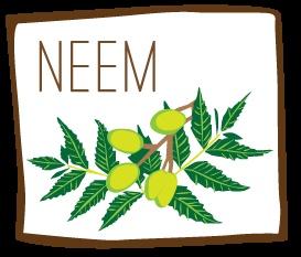 The Neem Tree & Its Antioxidant Powers