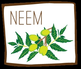 The Neem Tree & Its Antioxidant Powers