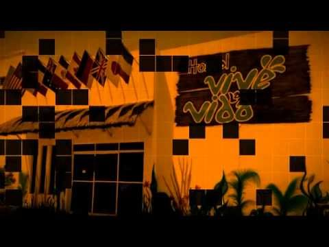 vivelavida hostel ,tours & booking, lodgage, cenotes ,,, experience the mayan culture and roots.
