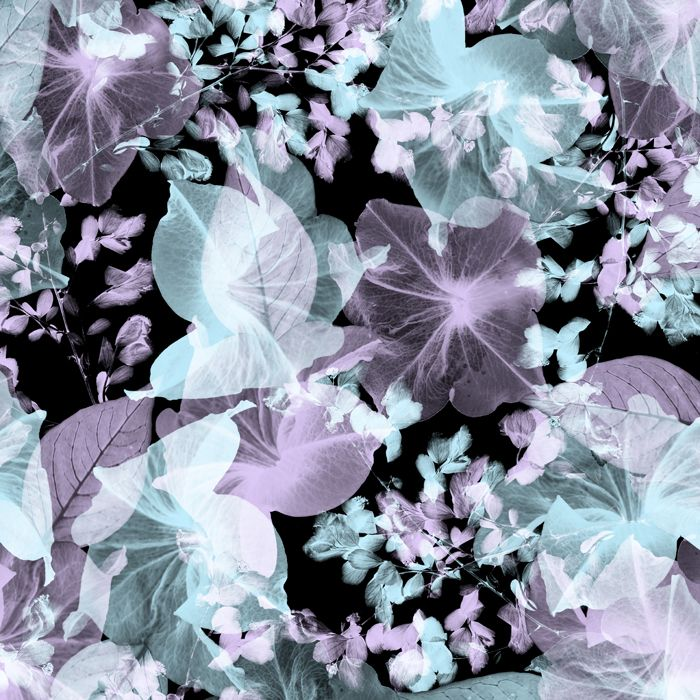 Cabbage Rose Flower Print Purple Abstract Art Kitchen Wall: 17 Best Images About X-RAY On Pinterest