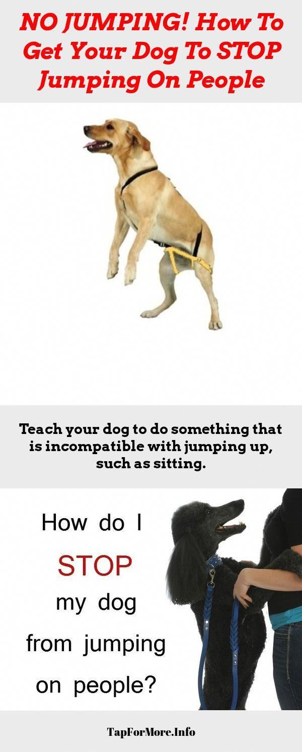 11a7dc03cc6d5c3995236a1a88afe5a9 - How To Get A Dog To Stop Aggressive Biting