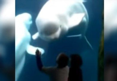 2 Kids Are Fascinated By A Beluga Whale, But When He Does THIS At :53, They Scream! (VIDEO)