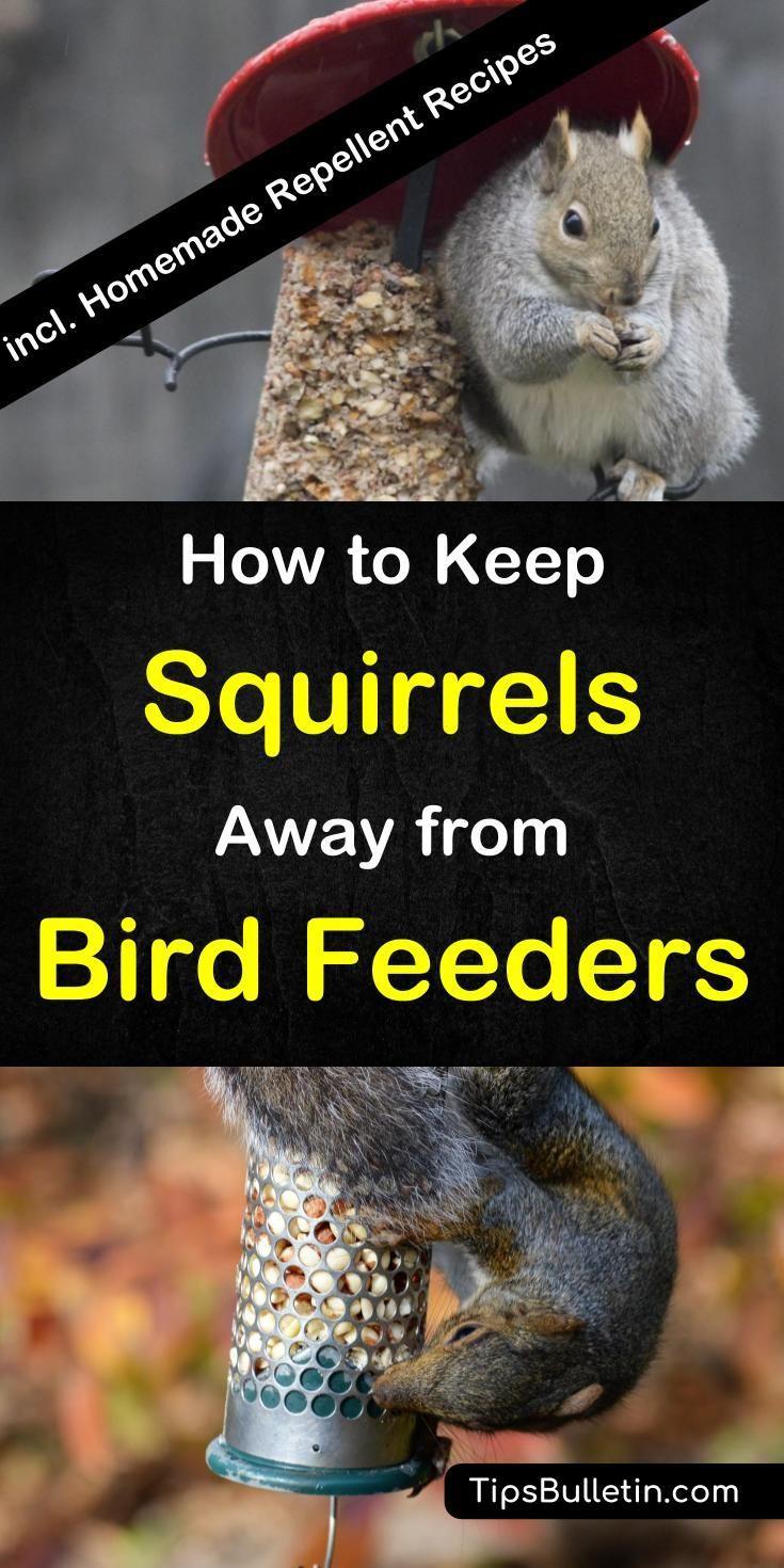 12 Crafty Ways To Keep Squirrels Away From Bird Feeders Squirrel Proof Bird Feeders Bird Feeders Get Rid Of Squirrels