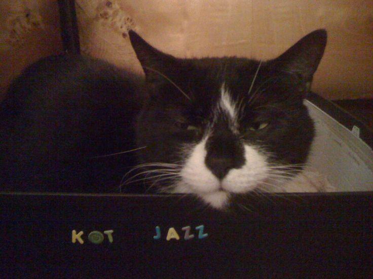 Jazz kocha kartony, kartoniki, pudełka!