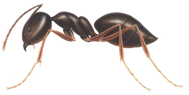 Ants - The Smooth Guide to Animals and the English Language