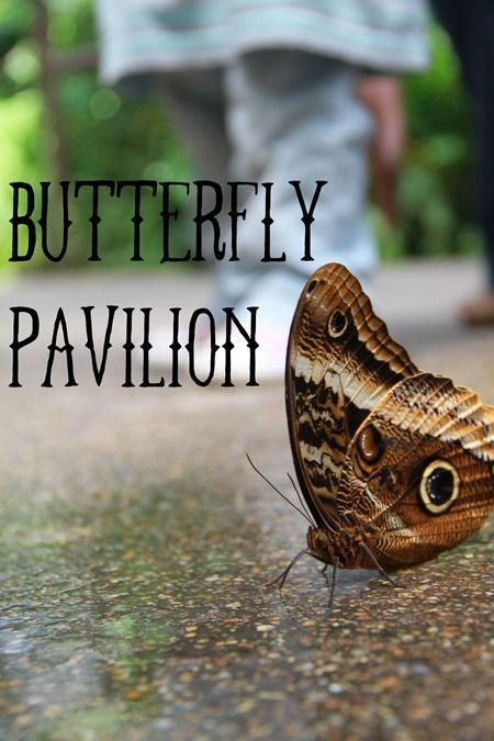 Taking your kids to the Butterfly Pavilion in Colorado