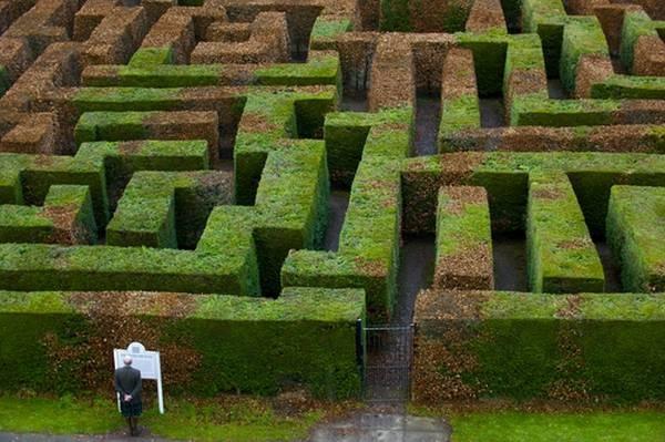 #maze