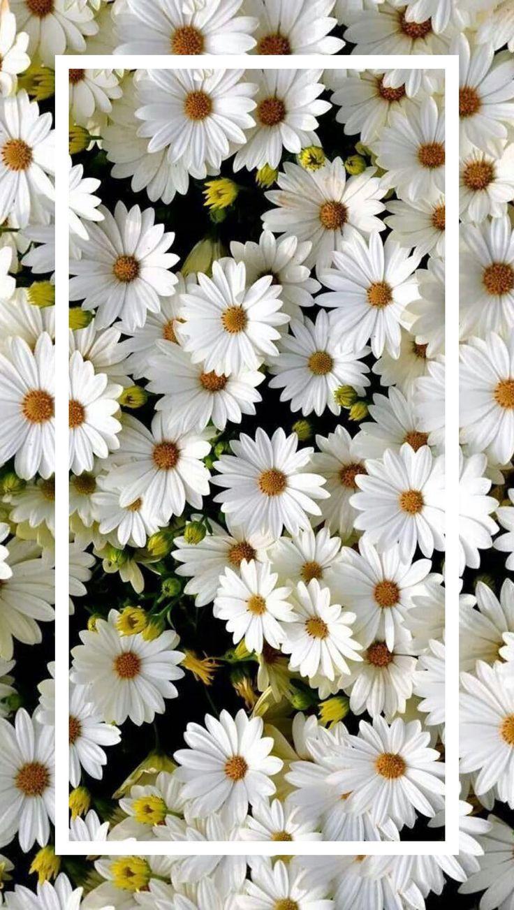 Flores Brancas top 736 X 1303