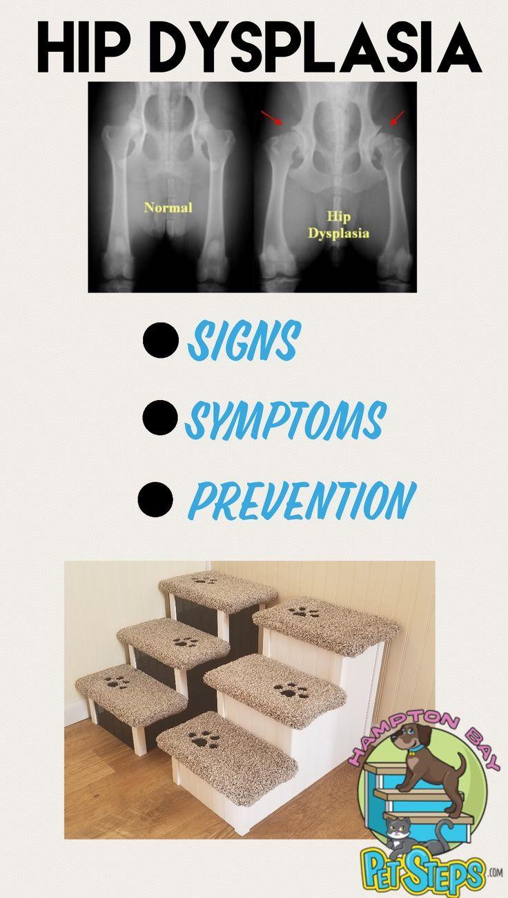Hip Dysplasia Is A Common Skeletal Disorder Among Senior Pets