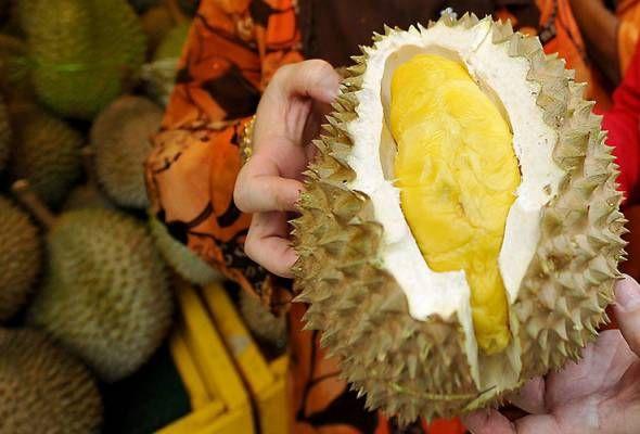 Ahli sains kaji cara hilangkan bau 'raja buah' hasil coklat daripada durian   SINGAPURA: Buah durian sering kali dikaitkan dengan baunya yang kuat serta kurang enak.  Aromanya yang begitu menyengat menyebabkan 'raja buah' ini dilarang dibawa ke dalam hotel pesawat dan beberapa lokasi tumpuan lain.  Namun bagi yang menggemarinya bau durian bukan masalah besar malah ia umpama candu yang menggamit penggemar untuk menikmatinya.  Persoalan timbul tentang dari mana asal bau kuat daripada durian…