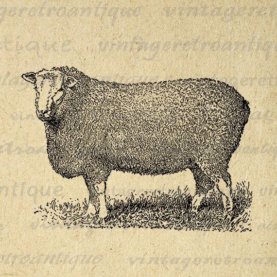 Digital Printable Antique Sheep Graphic Cute Animal Image Download Vintage Clip Art Jpg Png Eps 18x18 HQ 300dpi No.3532 @ vintageretroantique.etsy.com