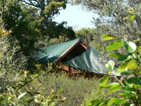 Planning your next family holiday? Teniqua Treetops has lots for everyone to do... Contact us to check rates and availability  Glamping in style in a forets between Sedgefiled & Knysna, Garden Route, South Africa  www.teniquatreetops.co.za