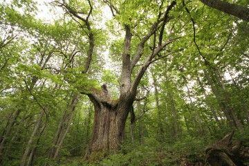 """""""Foresta in festa"""" , il bosco sacro di Patrignone"""