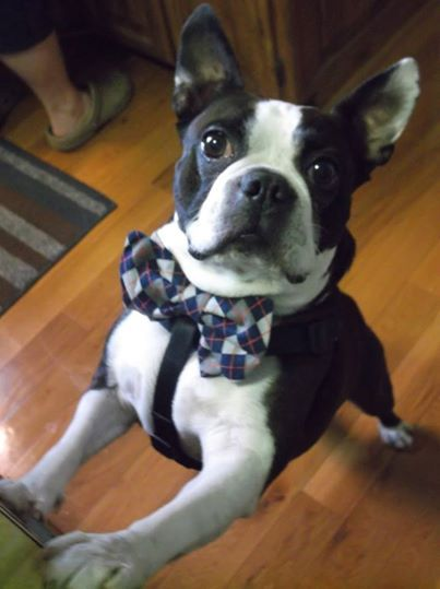 Charleston wearing his bow tie! (Facebook fan photo from Lauren Ooten Yeary)
