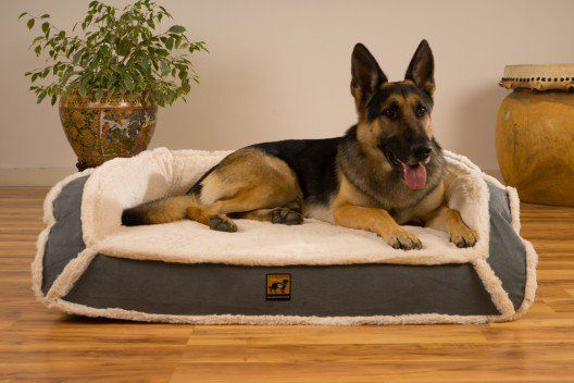Orthopedic LUX Bolstered Bed - XL Dog Beds