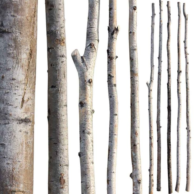 Birch Poles Accents Guide To Winter Decor Branch