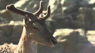 Makryammos Bungalows - YouTube