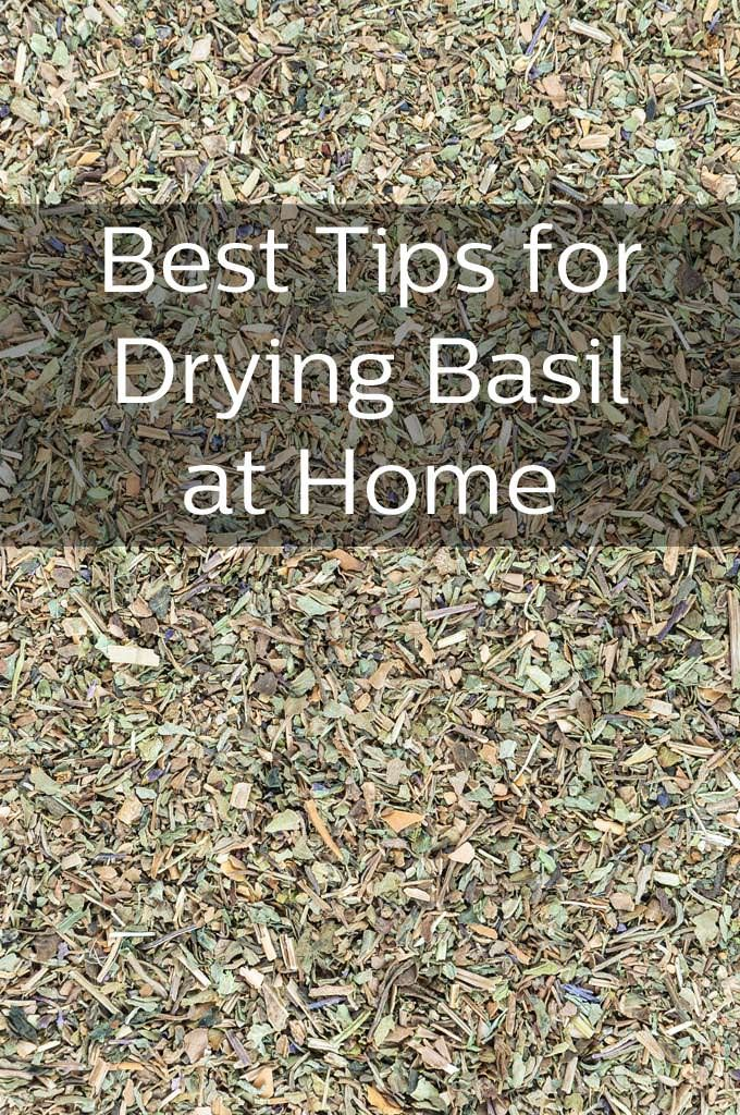 How to Dry and Store Basil from @thecookful