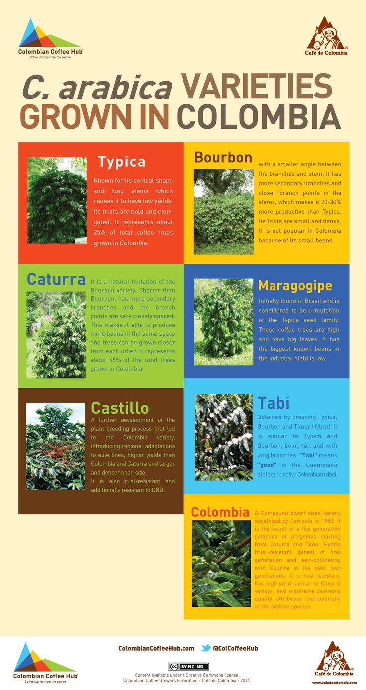 coffea arabica varieties grown in colombia