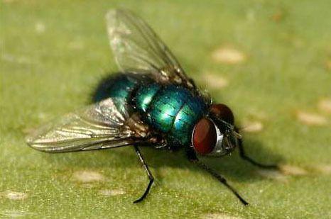 Vliegen verjagen   enkele tips om vliegen te bestrijden om ze buiten de deur en op afstand van je afvalcontainer te houden.