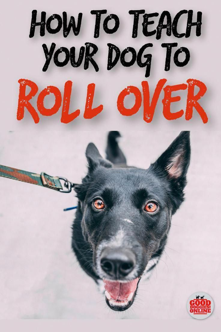 Nice Tutored Best Dog Training Tricks Dog Training Techniques