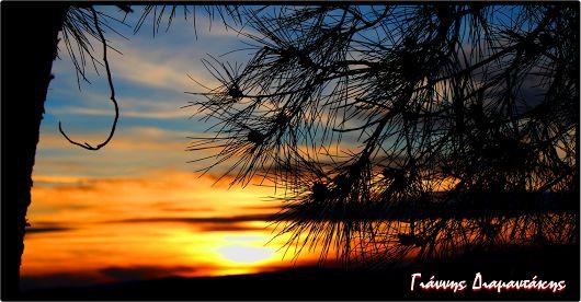 Ηλιοκεντίστρες τ' ουρανού...χρυσές πευκοβελόνες..!!!