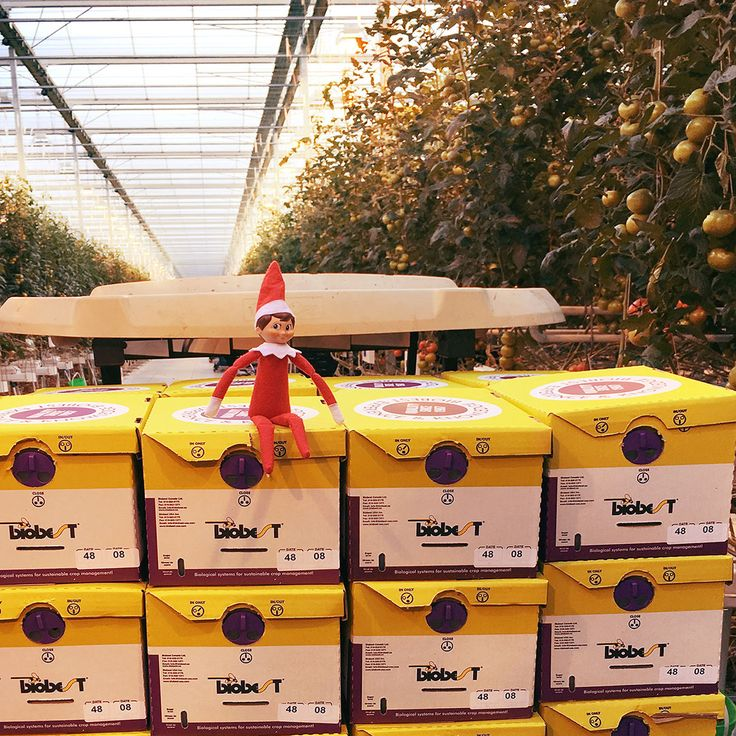 Frankie has made his way to our greenhouse in Delta, OH!  Frankie is hitching a ride with a new group of Bumble Bees that just arrived! #Ohio #BumbleBees #ElfOnTheShelf #Greenhouse