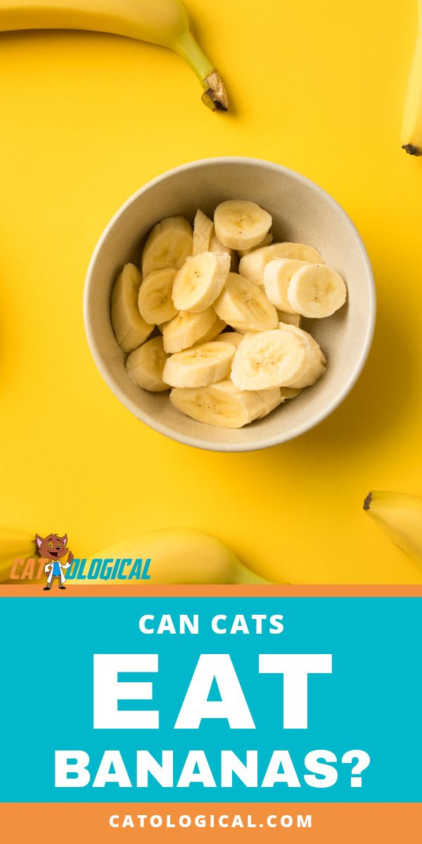 Can Cats Eat Bananas Are They Safe Or Bad For Them Find Out What Cats Can Eat Best Cat Food Kitten Food