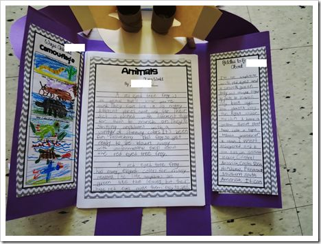 Next up, the students each chose a specific animal that they were interested in learning more about. We began with a little research which we used to write animal riddles. We published these riddles into a class book and sent it off to Student Treasures Publishing to make us legit authors!